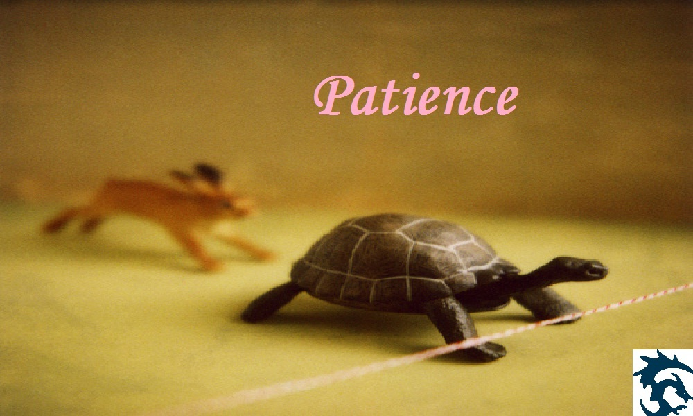 Value of the Day – Patience